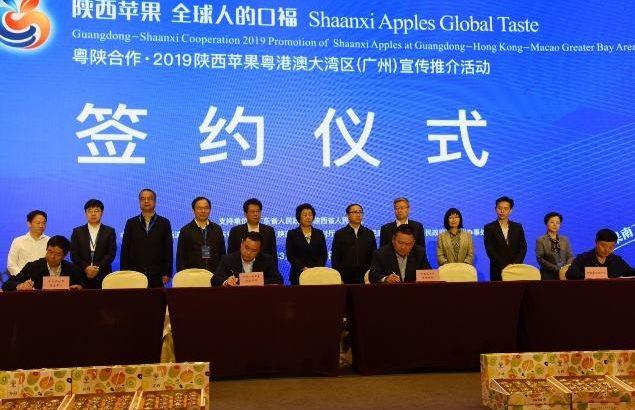 陝西省初の果実産業発展連合が設立