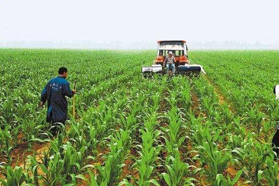 陝西省の春季播種が半分終了 年間の穀物播種面積は4500万ムーに