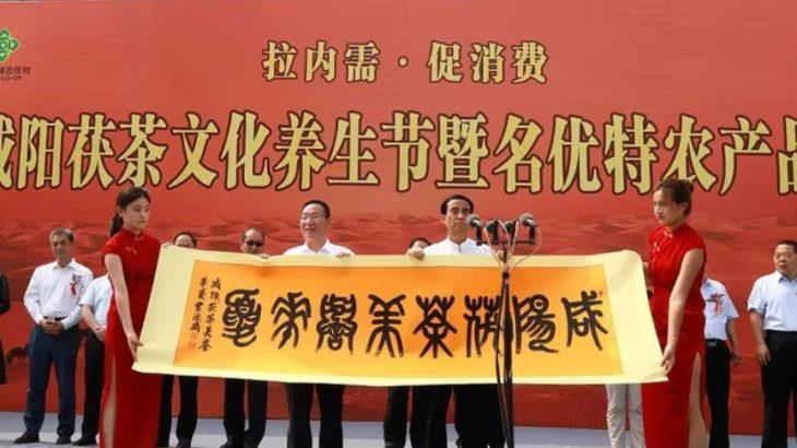 陝西省咸陽市:茯茶を飲んで文化を味わう 内需牽引で消費を促進