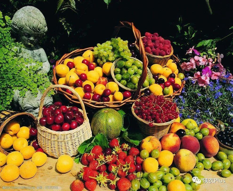 2020年の陝西省の果物オンライン小売額は118億1600万元